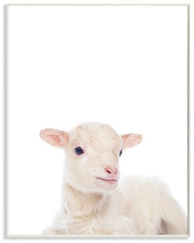 Baby Lamb Studio Photo--Wood Sign