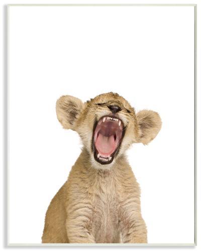 Baby Lion Cub Studio Photo--Wood Sign