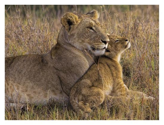 Baby Lion With Mother-Henry Jager-Giclee Print