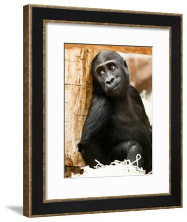 Baby Monkey Ape Animal-Wonderful Dream-Framed Art Print