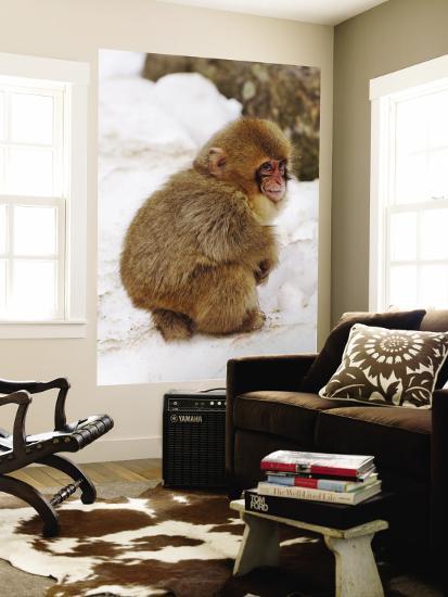 Baby Snow Monkey (Japanese Macaque) at Jigokudani Yaen-Koen Hot Spring-Frank Carter-Wall Mural