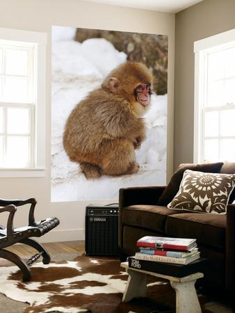 https://imgc.artprintimages.com/img/print/baby-snow-monkey-japanese-macaque-at-jigokudani-yaen-koen-hot-spring_u-l-pfh0us0.jpg?p=0