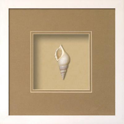 Baby Tibia Shell Shadowbox - Sand