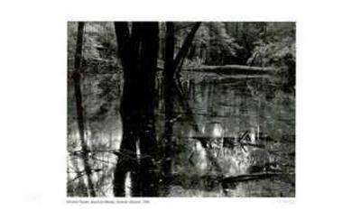 Bacchus Woods - Simcoe, Ontario-Simeon Posen-Limited Edition