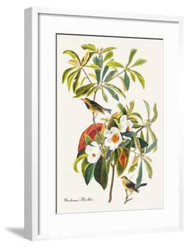 Bachman's Warbler-John James Audubon-Framed Art Print