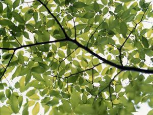 Backlit Green Tree Branch