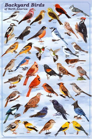Backyard Birds Educational Science Chart Poster--Poster