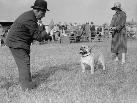 Bad Bulldog--Photographic Print