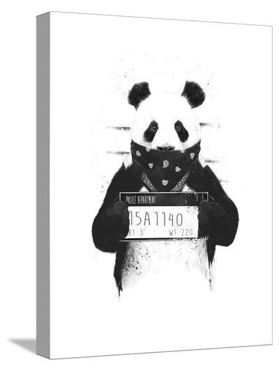 Bad Panda-Balazs Solti-Stretched Canvas Print