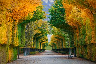 Long Road in Autumn Park by badahos