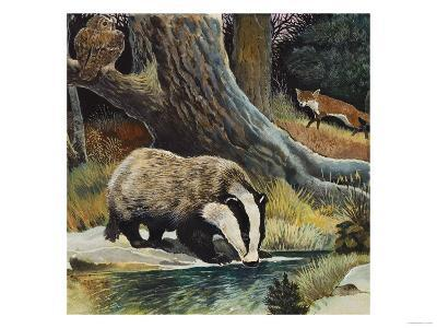 Badger, Fox, Owl and Mouse--Giclee Print