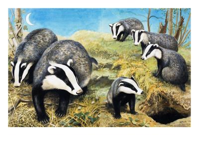 https://imgc.artprintimages.com/img/print/badgers-from-nature-wonderland-1970_u-l-pcevg10.jpg?p=0