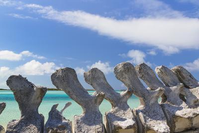 Bahamas, Exuma Island. Sperm Whale Bones on Display-Don Paulson-Photographic Print