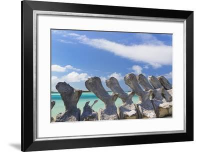 Bahamas, Exuma Island. Sperm Whale Bones on Display-Don Paulson-Framed Photographic Print