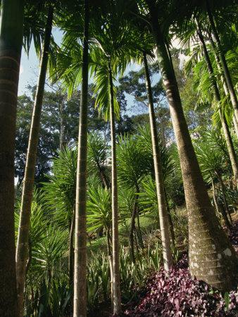 https://imgc.artprintimages.com/img/print/balata-gardens-martinique-west-indies-caribbean-central-america_u-l-pxulwf0.jpg?p=0