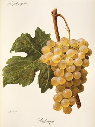 Balavry Grape-A. Kreyder-Giclee Print