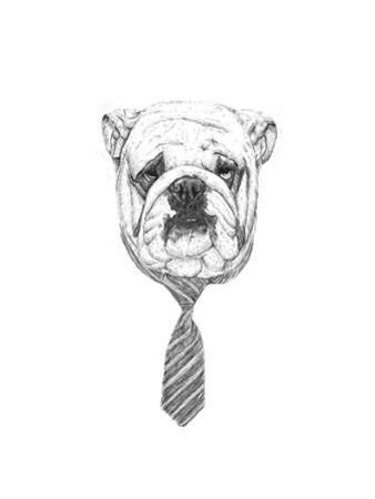 Bulldog by Balazs Solti