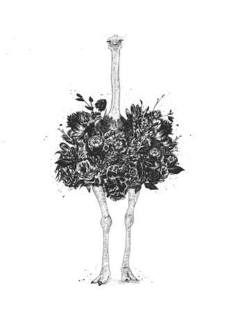 Floral Ostrich by Balazs Solti