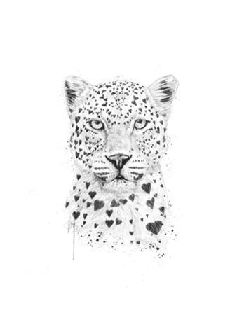 Lovely Leopard by Balazs Solti