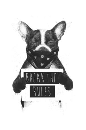 Rebel Dog by Balazs Solti