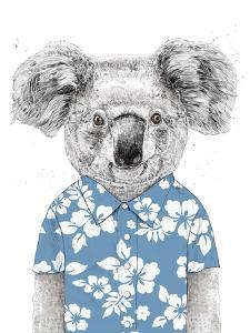 Summer Koala (Blue) by Balazs Solti