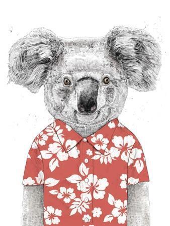 Summer Koala (Red) by Balazs Solti