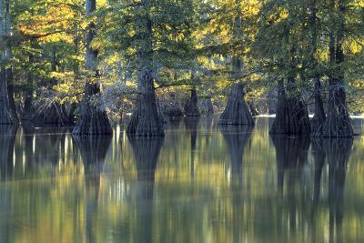 Bald Cypress Trees Horseshoe Lake State Park Illinois-Richard and Susan Day-Photographic Print