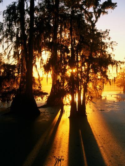 Bald Cypress Trees Silhouetted at Sunset at Lake Martin-John Elk III-Photographic Print