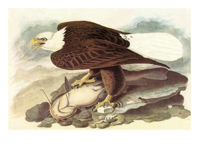 Bald Eagle 2-John James Audubon-Art Print