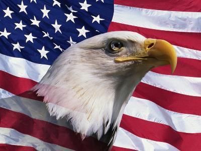 Bald Eagle and American Flag-Joseph Sohm-Photographic Print