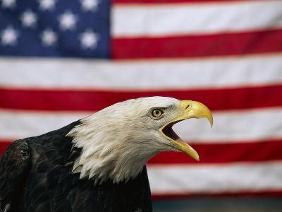 Bald Eagle and American Flag-W^ Perry Conway-Photographic Print