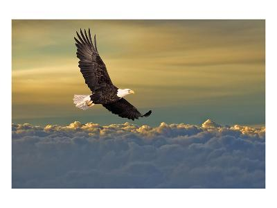 Bald Eagle Flying Above Clouds--Art Print