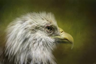 Bald Eagle in the Grove-Jai Johnson-Giclee Print