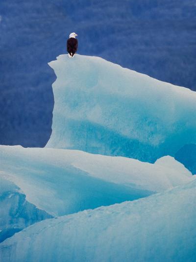 Bald Eagle on an Iceberg in Tracy Arm, Alaska, USA-Charles Sleicher-Photographic Print