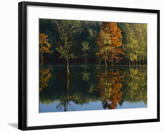 Baldcypress and Water Tupelo, Otter Slough Natural Area, Stoddard County, Missouri, USA-Charles Gurche-Framed Photographic Print