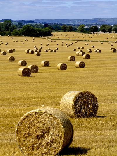 Bales of Hay in County Carlow, Ireland-Chris Hill-Photographic Print