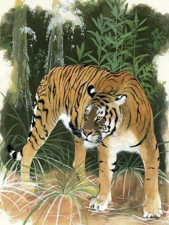 https://imgc.artprintimages.com/img/print/bali-tiger_u-l-pcj7bm0.jpg?p=0