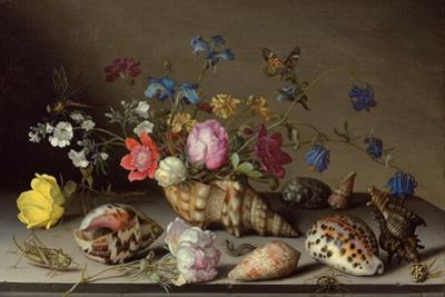 Flowers, Shells and Insects on a Stone Ledge