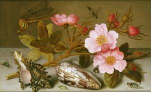 Still Life Depicting Flowers, Shells and a Dragonfly by Balthasar van der Ast