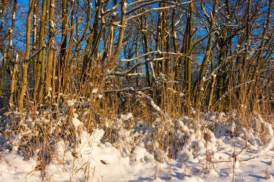 Baltic Sea, Winter-Catharina Lux-Photographic Print