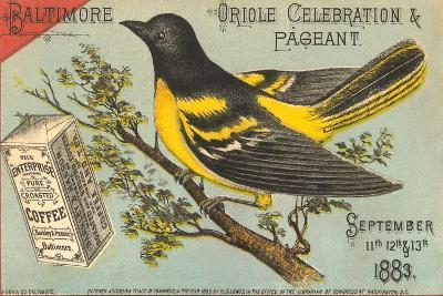 Baltimore Oriole Pageant--Art Print