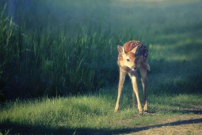 Bambi-Roberta Murray-Photographic Print