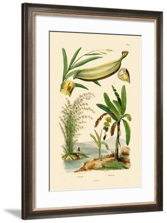 Bamboo, 1833-39--Framed Giclee Print