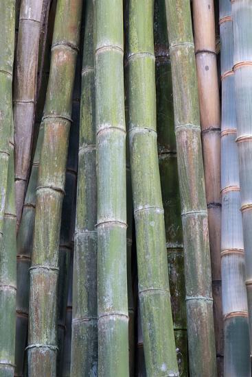 Bamboo Fence-Ramona Murdock-Photo