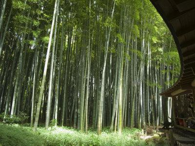 https://imgc.artprintimages.com/img/print/bamboo-forest-hokokuji-temple-garden-kamakura-kanagawa-prefecture-japan_u-l-p1n2xq0.jpg?p=0
