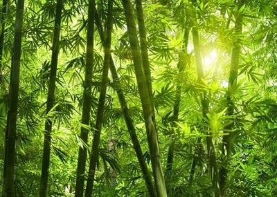 https://imgc.artprintimages.com/img/print/bamboo-forest-i_u-l-f8by3x0.jpg?p=0