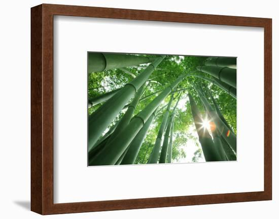Bamboo Forest in the Morning-Liang Zhang-Framed Photographic Print