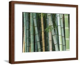 Bamboo Forest, Kyoto, Japan-Rob Tilley-Framed Photographic Print