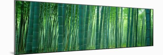 Bamboo Forest, Sagano, Kyoto, Japan--Mounted Photographic Print