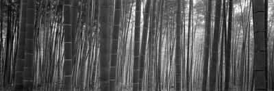 https://imgc.artprintimages.com/img/print/bamboo-forest-sagano-kyoto-japan_u-l-pxmxsq0.jpg?p=0